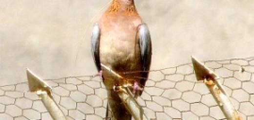 uciążliwy ptak