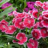 flowers-491921_640