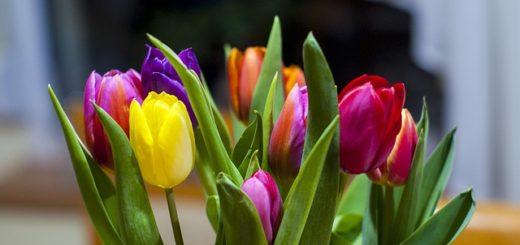 tulipany z dowozem