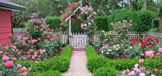 zadbaj-o-ogrod-i-wyhoduj-piekne-roze-pienne