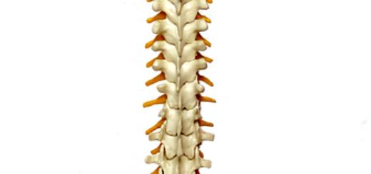 Bóle kręgosłupa lędźwiowego to najczęstsza przypadłość pracowników biurowych