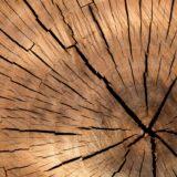 korowanie drewna