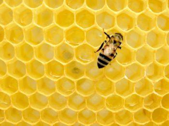 naturalny miód pszczeli prosto z pasiek